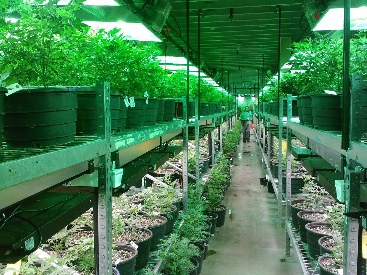Michigan Medical Marijuana Licensees Must Obtain Business Insurance
