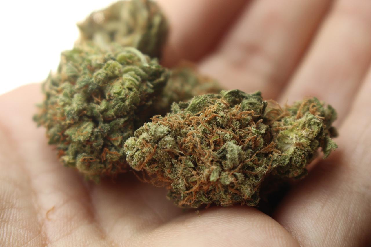 Michigan Opens Medical Marijuana Growing Business to Large Scale Operators